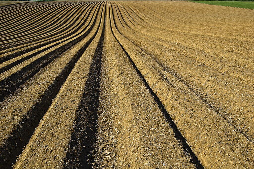 Wzrost cen ziemi rolnej w 2019 roku