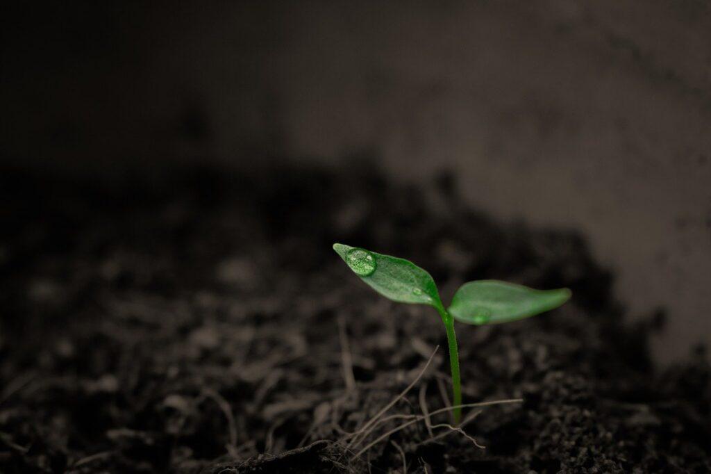 Zapasy wody w glebie - jak je odbudować?