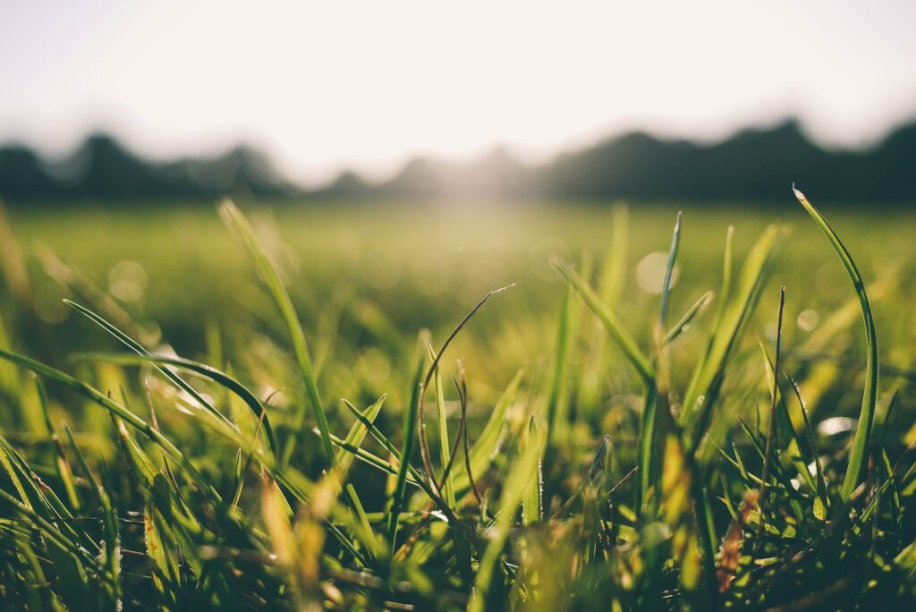 Na czym polega uprawa ziemi z wykorzystaniem wertykulatora?
